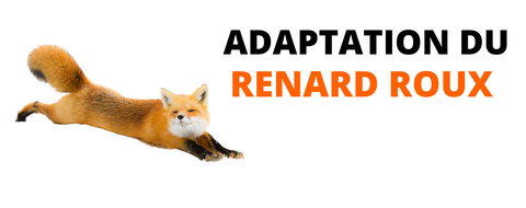 adaptation-du-renard-roux
