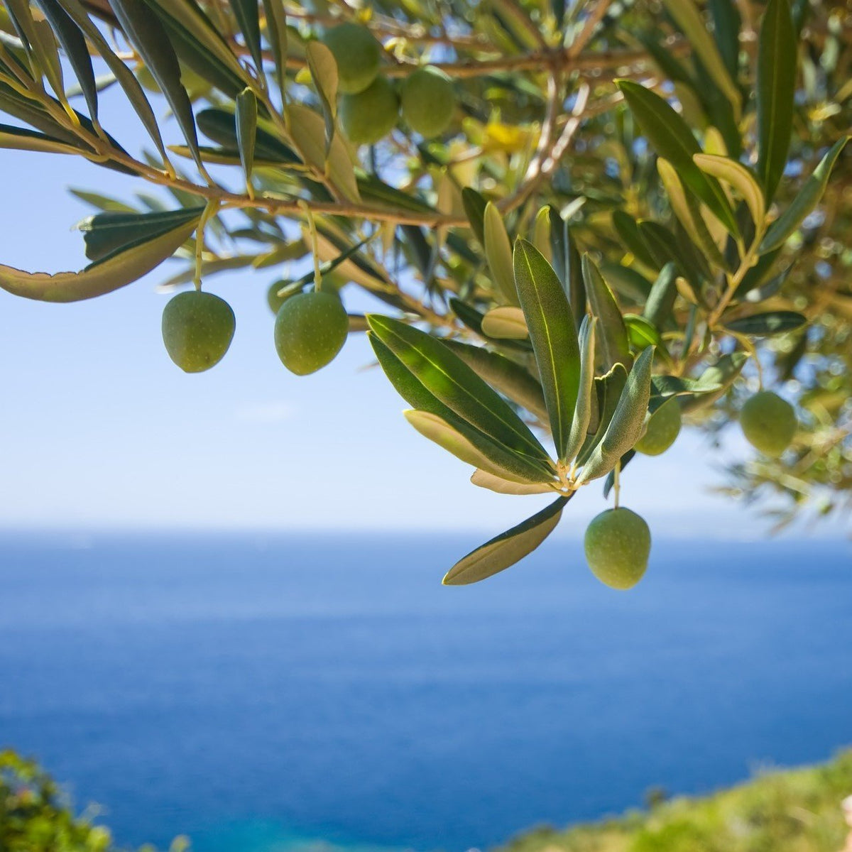 How does the physical environment affect olive oil? | Marqt.no