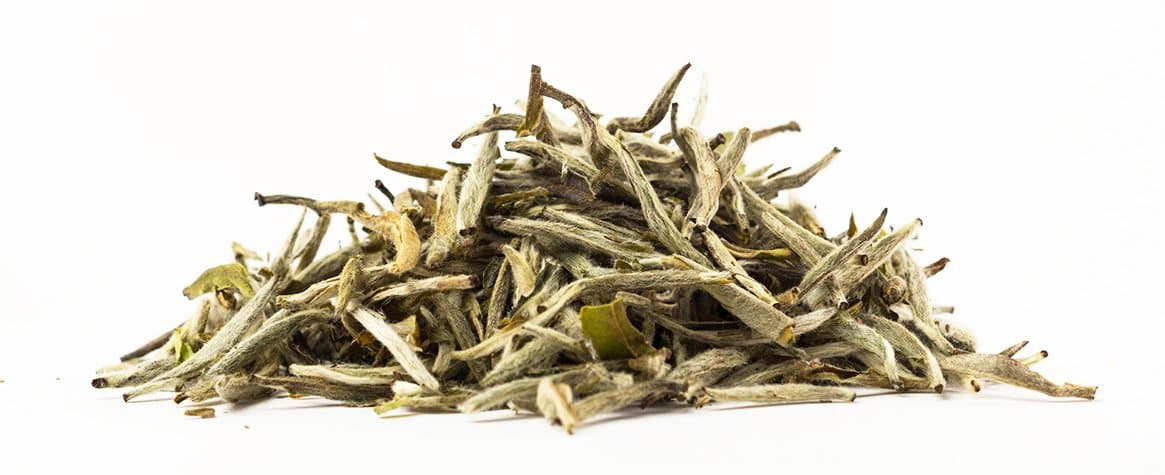 Silver Needle White - Jenwey Tea