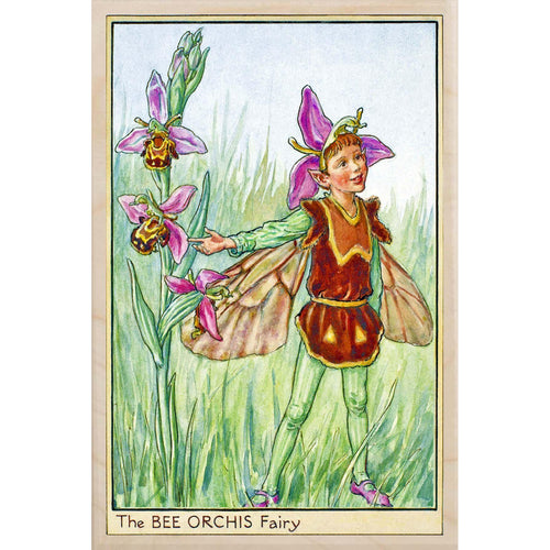 BEE ORCHIS FAIRY