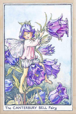 CANTERBURY BELL FAIRY