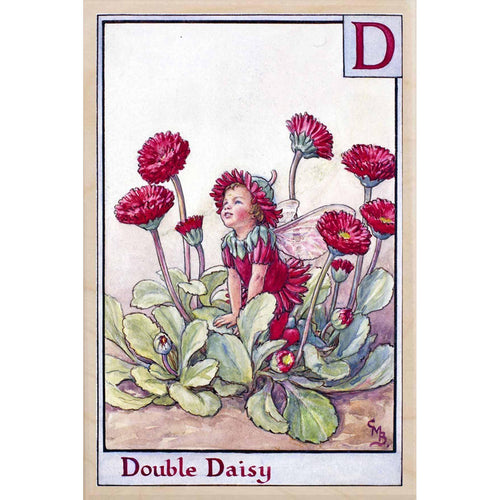 D DOUBLE DAISY FAIRY