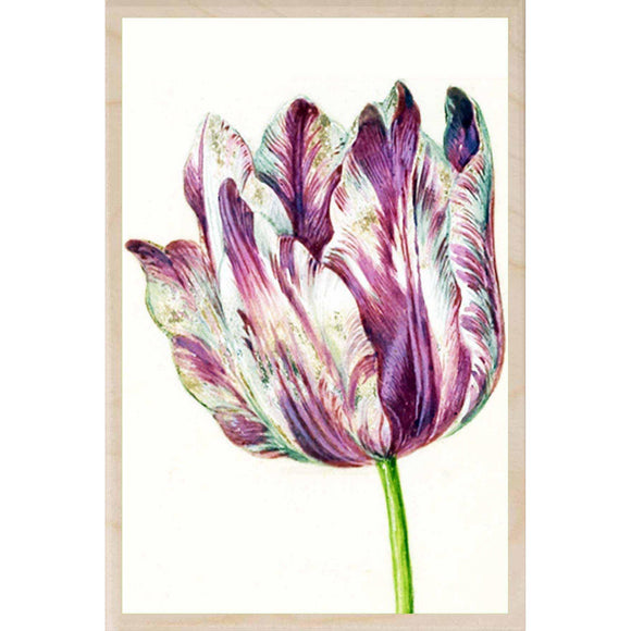 HOLTZBECK PINK TULIP WALL ART