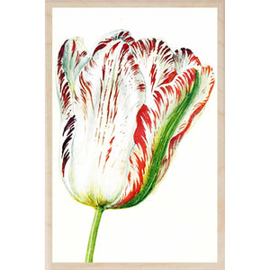 HOLTZBECK, WHITE TULIP WALL ART