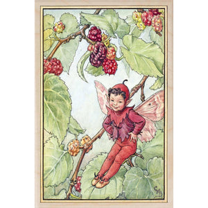 MULBERRY FAIRY