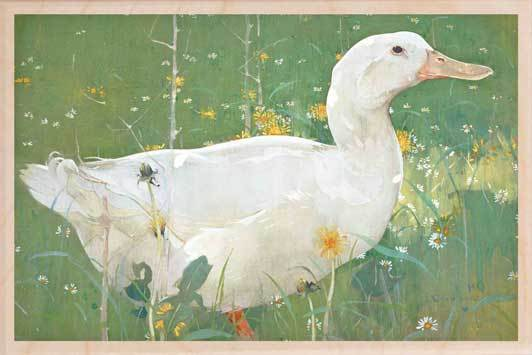 THE WHITE DRAKE-[national_galleries]-[Scotland]-[wooden_postcard]THE WOODEN POSTCARD COMPANY