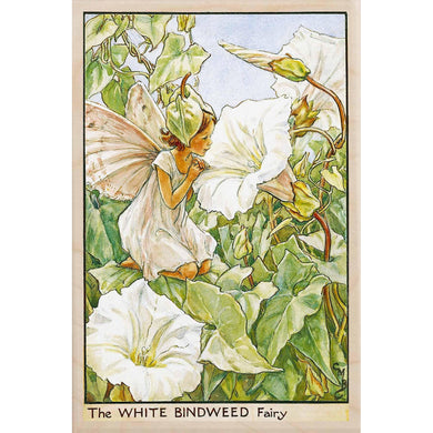 WHITE BINDWEED FAIRY