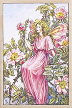 Load image into Gallery viewer, WILD ROSE FAIRY