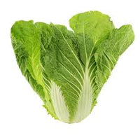 Fresh Napa Cabbage (1 Ct.)