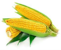 Fresh Yellow Corn Stalk 1ct