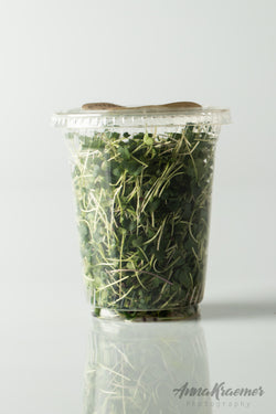 Reclaim Broccoli Shoots (**1 pack**)