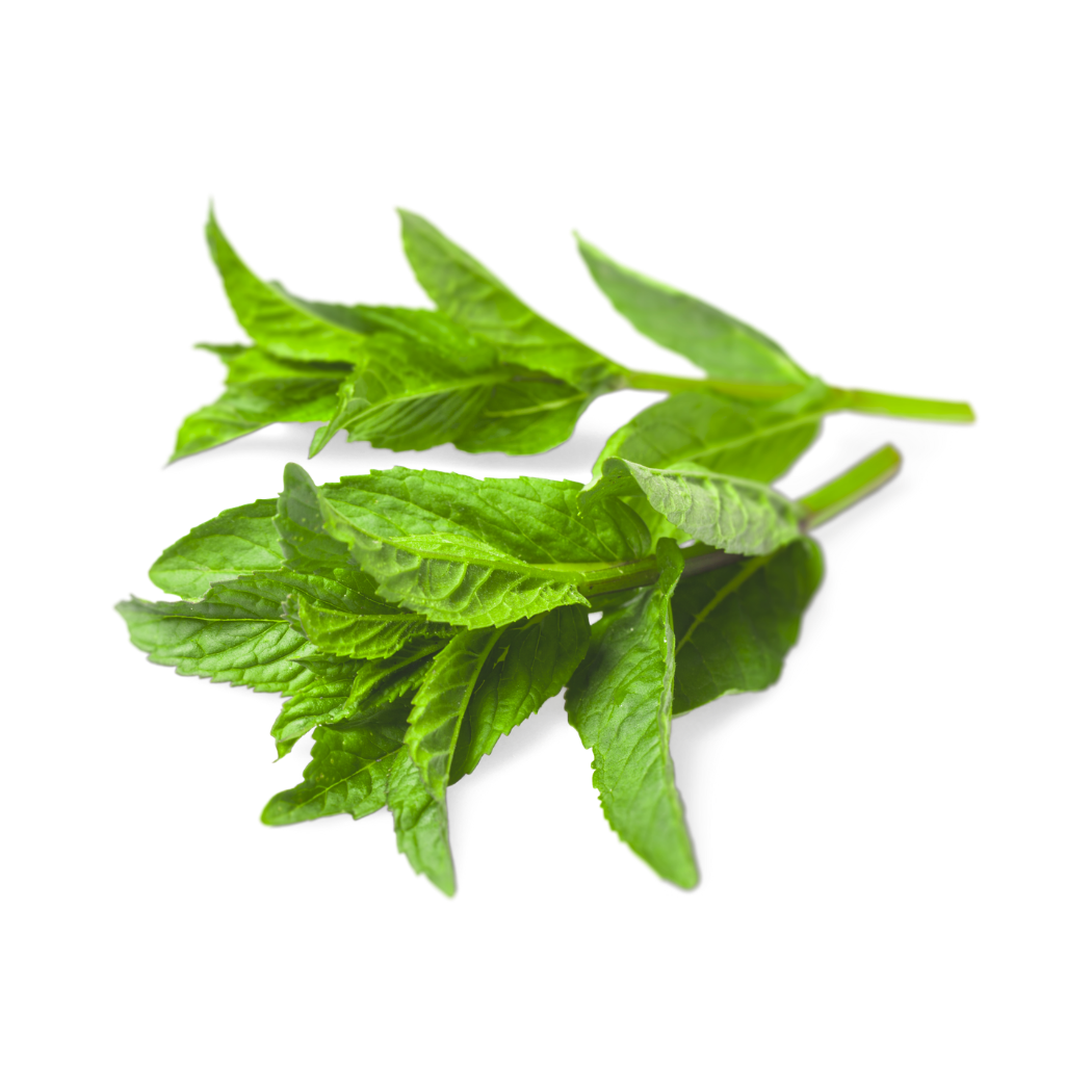 Mint (1 bunch)