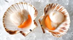 Half Shelled Scallops With Roe (Frozen)
