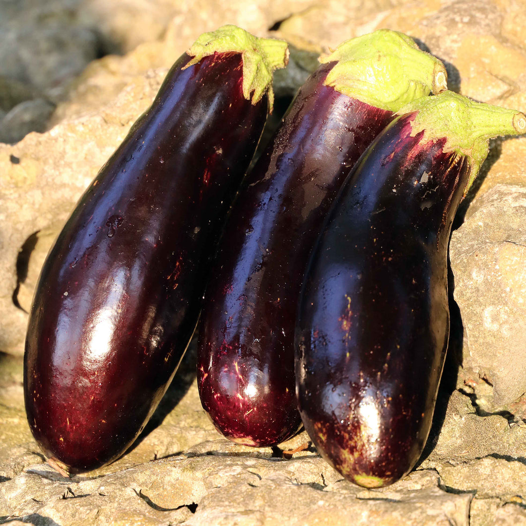 Eggplant, Diamond (Organic) Seeds