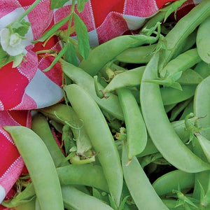 Pea, Amish Snap Seeds
