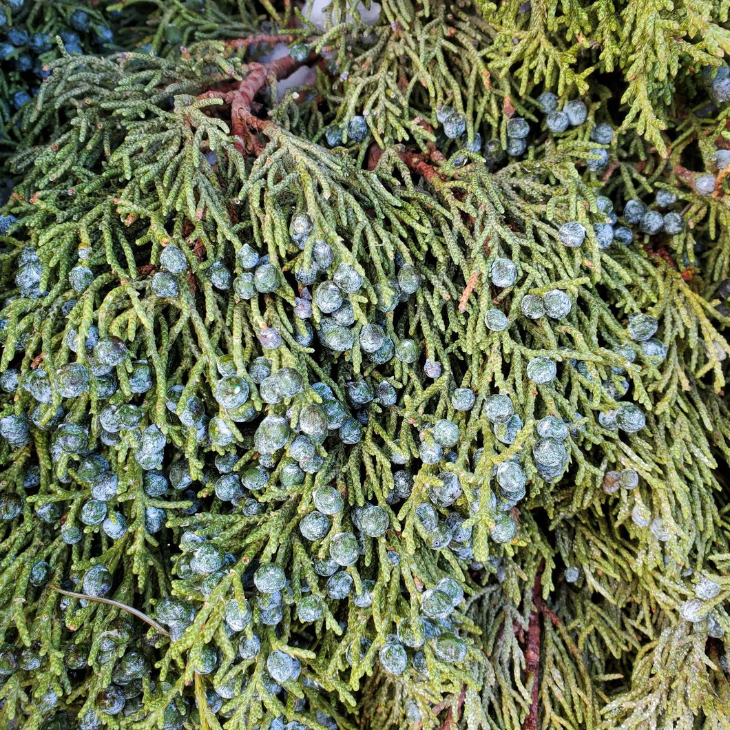 Blueberry Juniper Bough