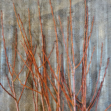 Load image into Gallery viewer, 4' Flame Willow Bundle