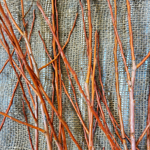 4' Flame Willow Bundle