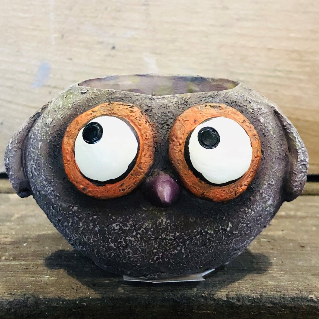 Baby Brown Owl Planter