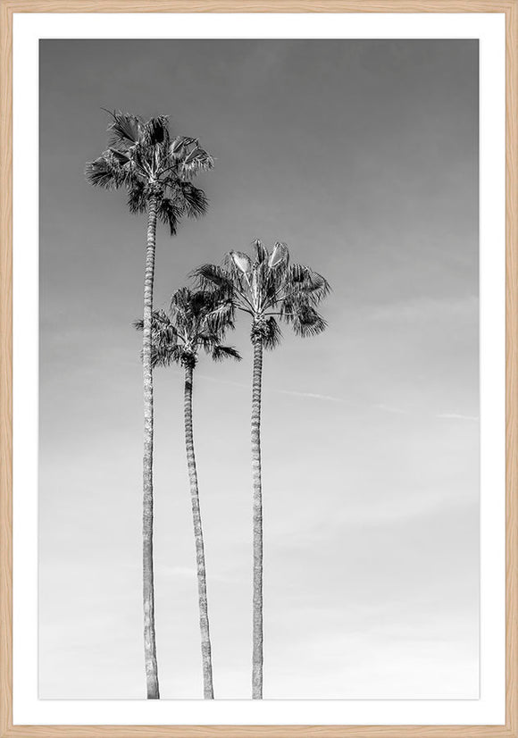 LA Palm Trees II
