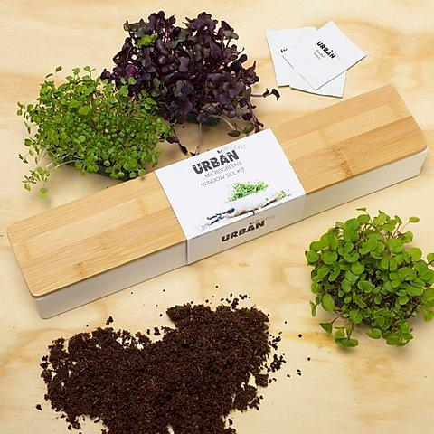 Microgreens Windowsill