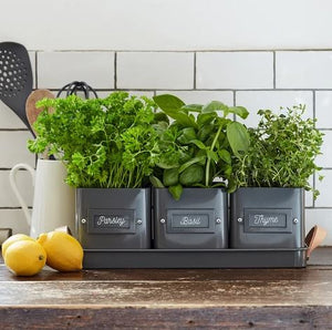 Burgon & Ball Herb Pots