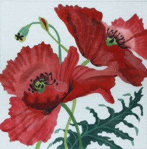 Corn Poppies