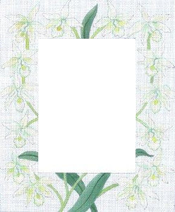 White Orchids Frame
