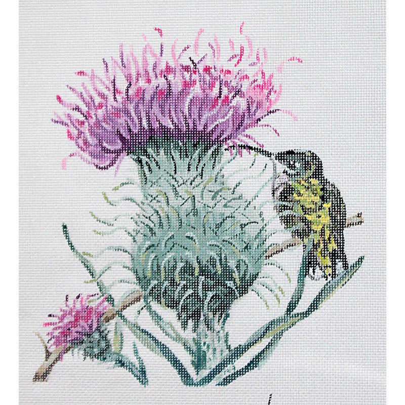 Thistle With Hummingbird