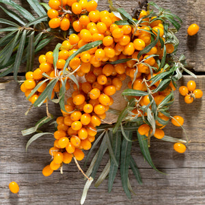Sea Buckthorn Berries, Frozen (5 LB)