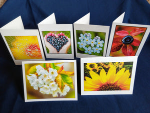 Flora Card Variety 6 for $15,  John Ashley Photography
