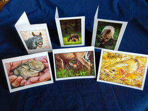 Wildlife Card Variety 6 for $15,  John Ashley Photography