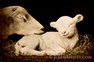 """Peaceful Lamb"" John Ashley"