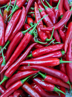 Loose Red Chillies, medium hot 60g