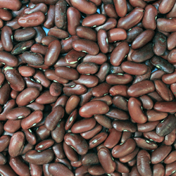 Red Kidney Beans 2 Cups
