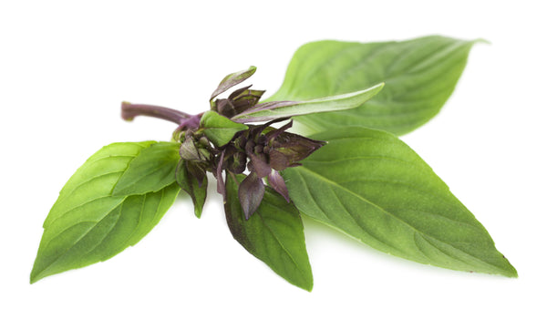 Bunched Thai Basil