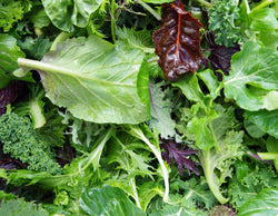 Mixed Salad Leaves Punnet