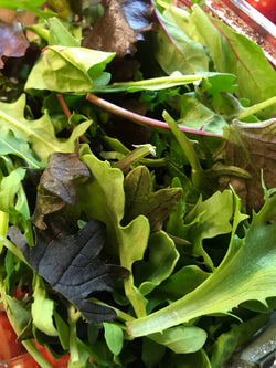 Local Salad Leaves