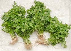Bunched Coriander