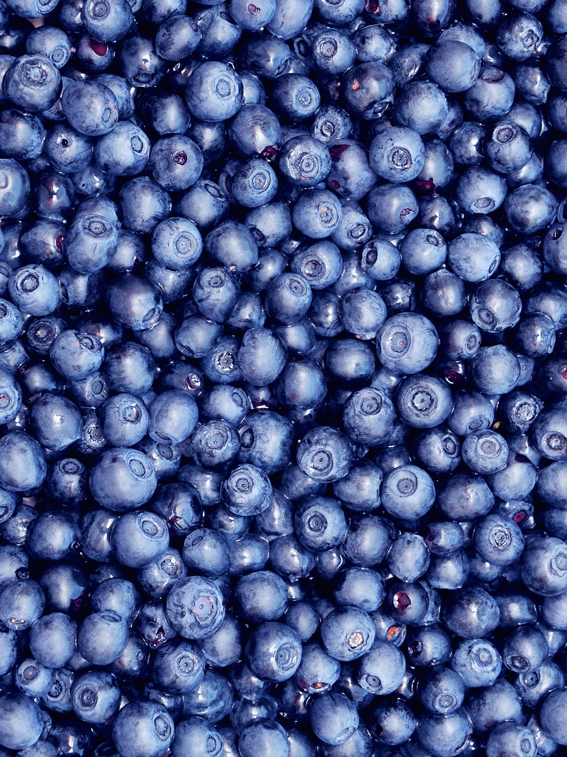 Blueberries - 1/2 pint