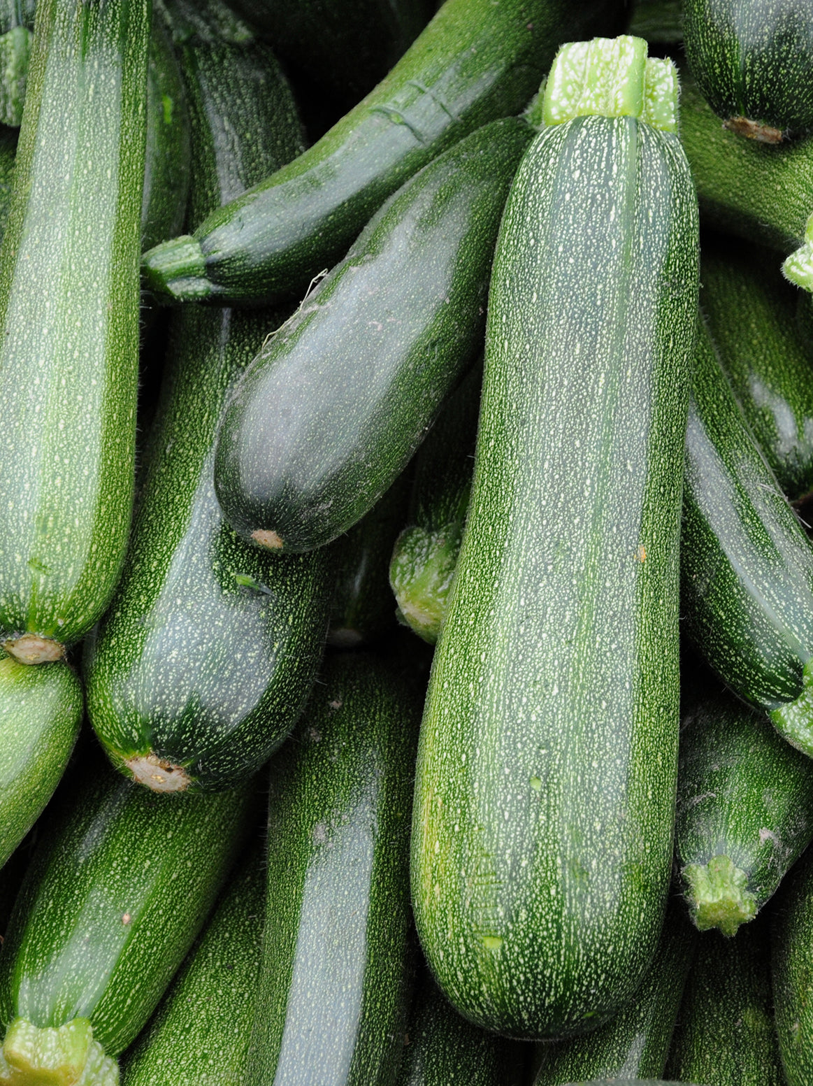 Zucchini Green - 2 Pieces