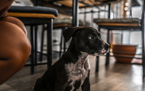 Tips on Having a Cool Bar Dog - Be Observant | Luv the Paw