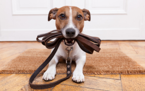 Tips on Having a Cool Bar Dog - Have Them Leashed | Luv the Paw