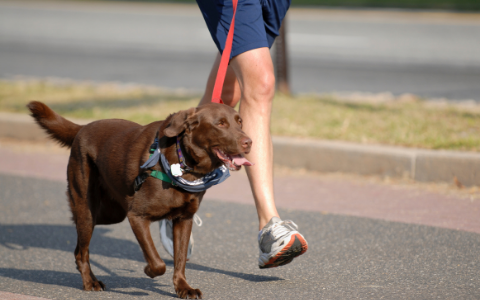 Tips on Having a Cool Bar Dog - Exercise Your Dog Before You Go | Luv the Paw