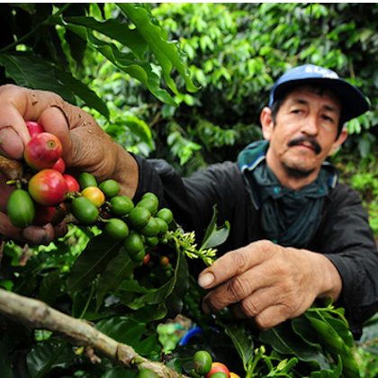 Coffee Picker