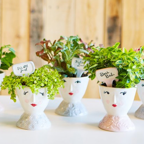 Face Lift Planter