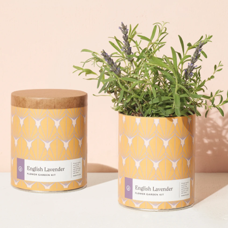 Modern Sprout English Lavender Planter