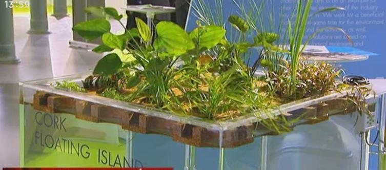 When Cork meets Hydroponics?
