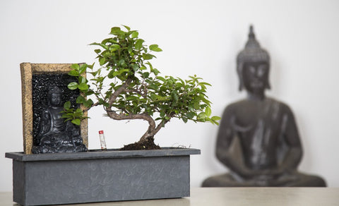Waterval Buddha-Bonsai-indofood2go