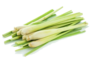 Lemongrass (Each)
